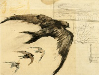 Винсент  ван Гог  Four Swifts with Landscape Sketches